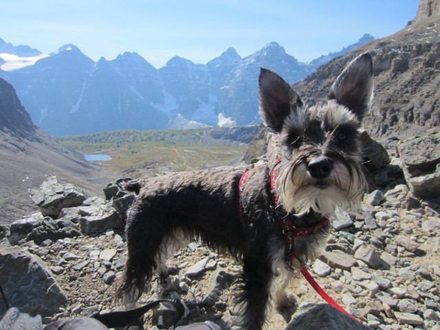 Dog on a hike in the Rockies