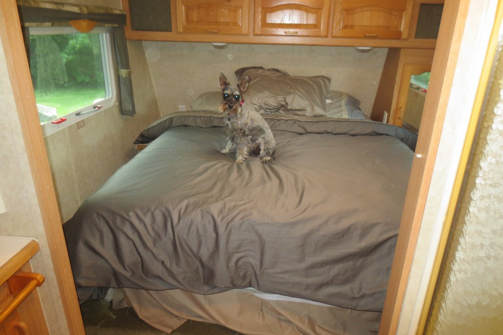 Little dog on bed in motorhome