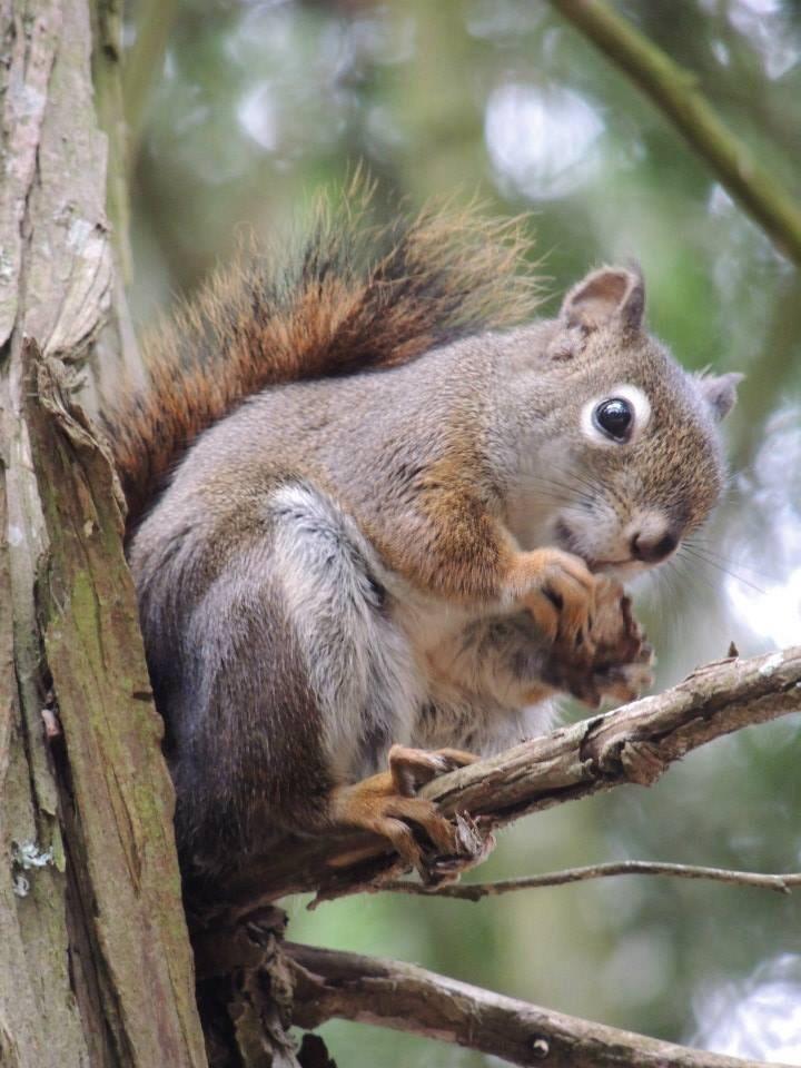 chipmunk in tree eating nuts
