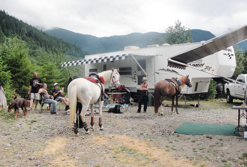 horses in front of RV in campsite
