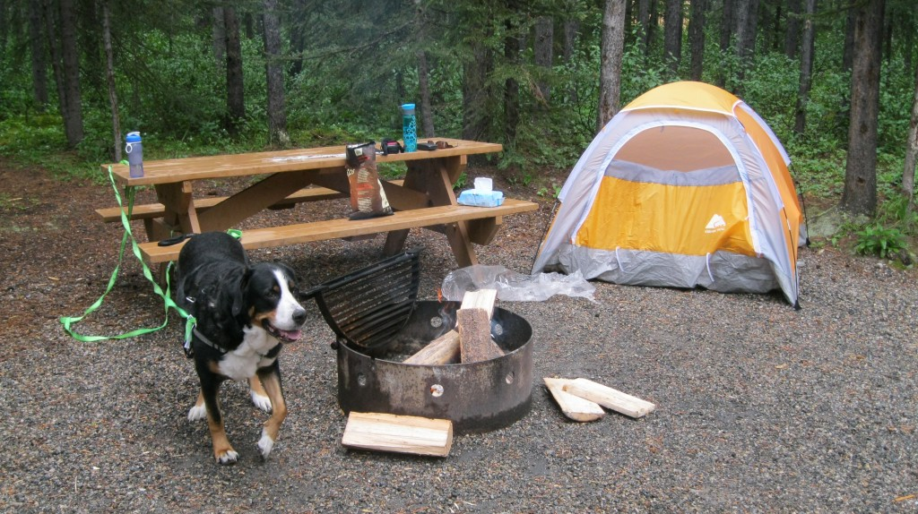 Dog in campsite with tent in background