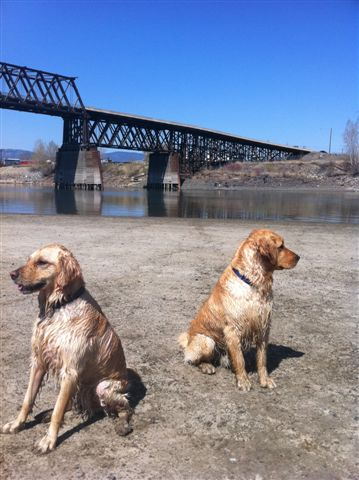 Two wet dogs sitting by river