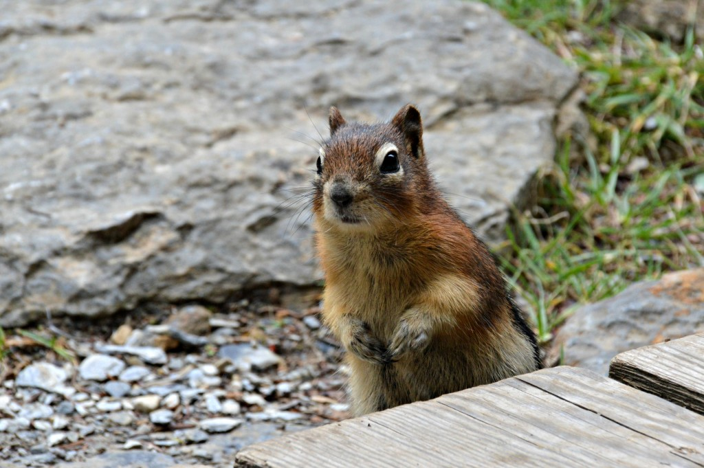 a curious squirrel