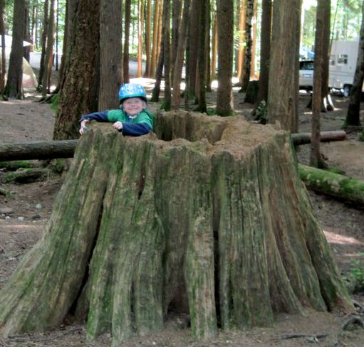 A child peering out of a tree stump