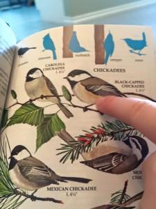 Check the Bird Book First!