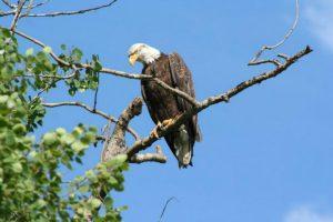 Bird Watching Deka Lake by Fishing Hwy 24 Tourist Association