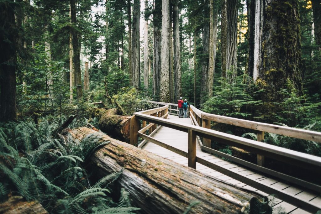 Cathedral Grove, MacMillan Provincial Park   Photo: Destination BC, Graeme Owsianski
