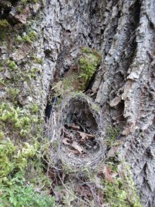 Hidden Geocache on Saltspring Island