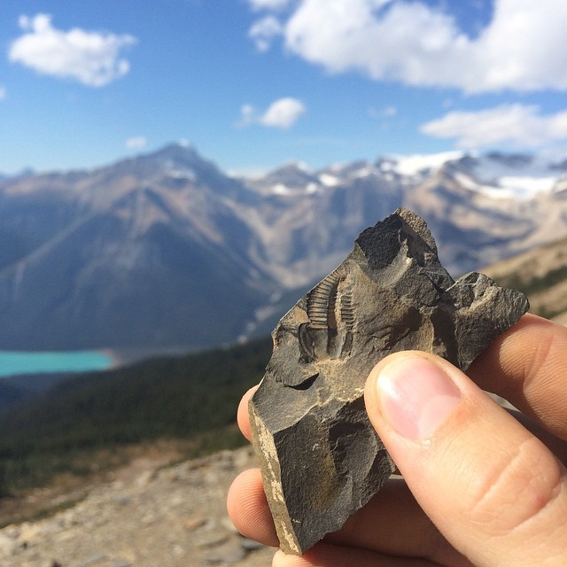 Fossil Found at Walcott Quarry, Yoho National Park. Photo: Aaron Purdy