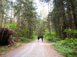 Walking forest roads