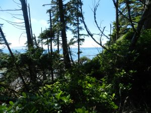 Ocean View from Trail along Botanical Beach Port Renfrew