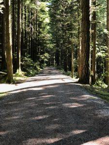 Trail at Golden Ears Park   Darlene Oswald