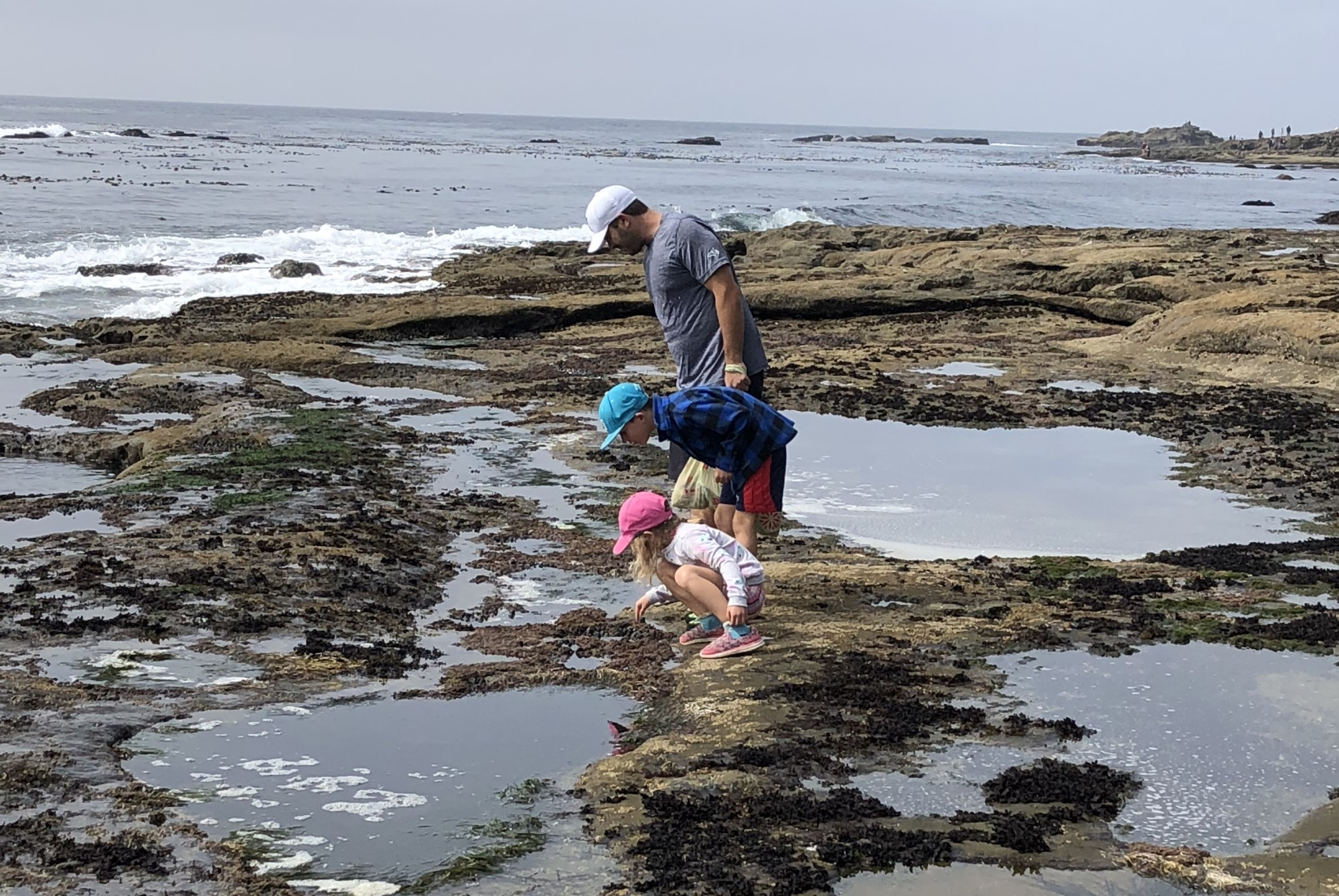 Exploring Tide Pools at Botanical Beach, Port Renfrew
